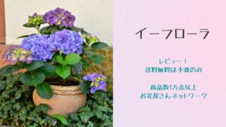【イーフローラ】レビュー!送料無料は一部のみ|好きな花をプレゼントしよう